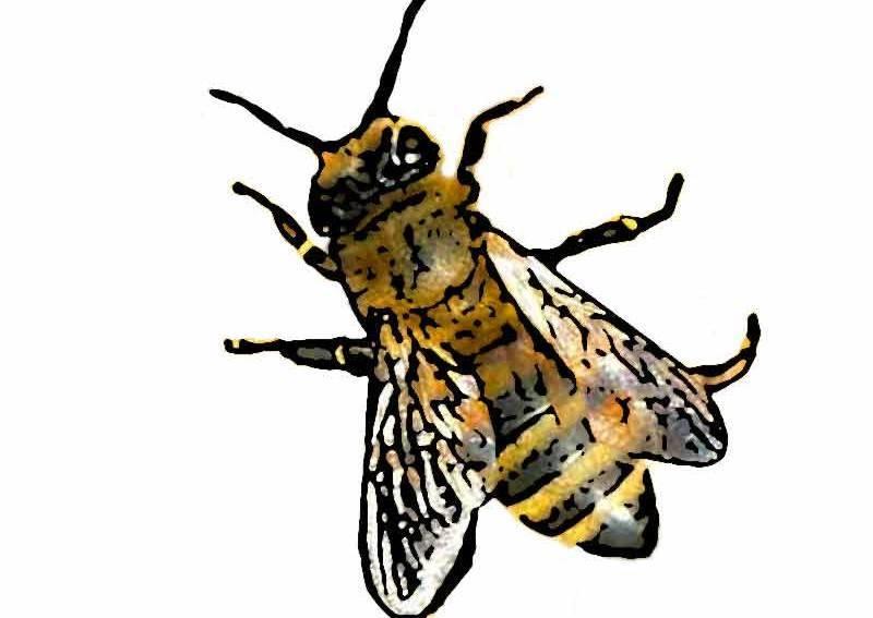 uncategorized archive seite 2 von 2 insektenstiche. Black Bedroom Furniture Sets. Home Design Ideas