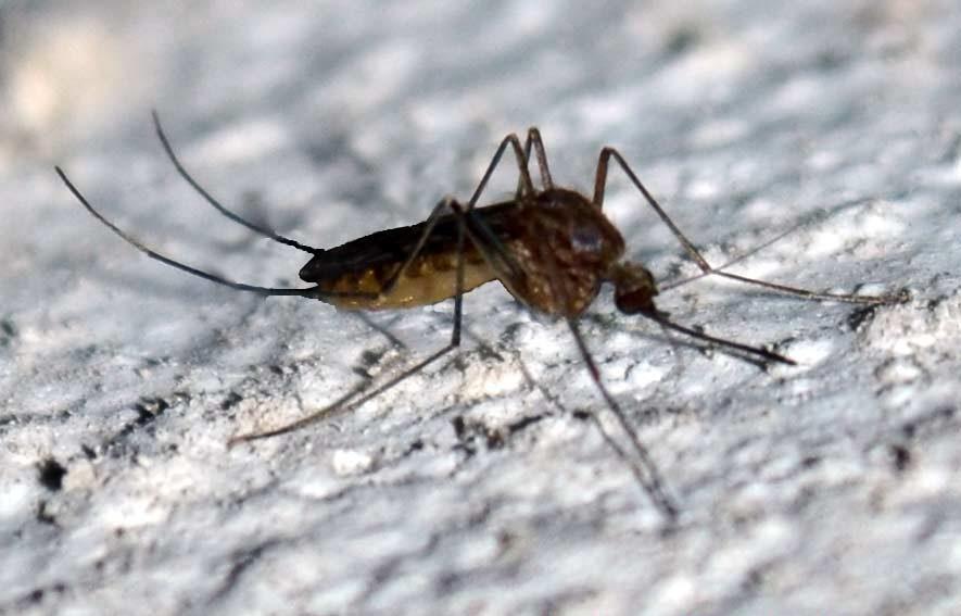 Moskito Insektenschutz